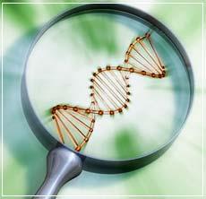 DNA magnify