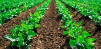 Food security: Socio-econonomic and environmental impacts of crop biotechnology