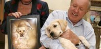 Back from the dead: Couple who paid $155,000 to CLONE their dog