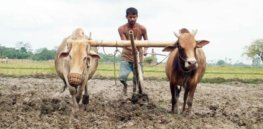india farmers