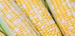 """Anti-GMO 'Big Lie': Is labeling really about our """"Right to Know""""?"""