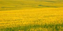 Fifth generation farmer defends biotechnology