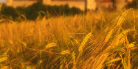 International experts analyse the socio-economic impacts of GM crops