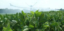 soybeanfield lg