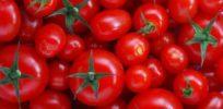Genetic breakthrough could spell end to supermarket tomatoes that taste like mush