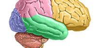 brainsavant