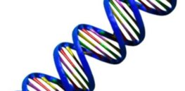 DNA pretty