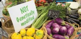 not GM foods
