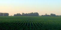 Bowman v. Monsanto: Supremes unsympathetic to farmer's deception