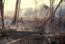 globalforestcoalition