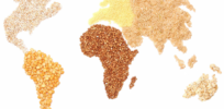 grains world