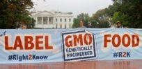 GMO labeling goes to Washington