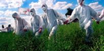 Is there really a science-based GMO controversy? False balance captures Discover magazine
