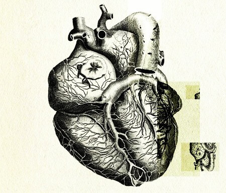 Gene therapy combats heart failure, provides renewed hope for genetic medicine