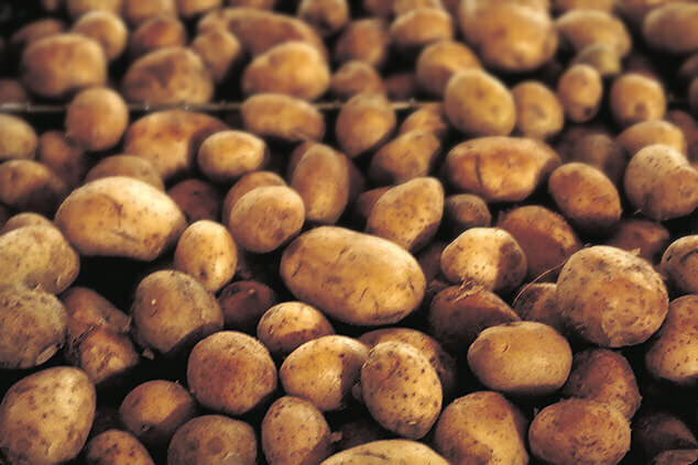 Breakthrough GE potato doesn't brown or produce potentially carcinogenic compound