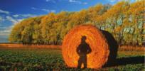 farmer shadow