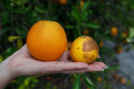 orange compare custom
