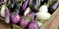 Talking Biotech: University of Southampton's Mark Chapman on eggplant's evolution, benefits of GMO variety