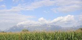 px Field corn Liechtenstein Mountains Alps Vaduz sky clouds landscape copy e
