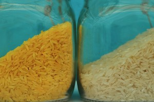 Golden rice (Credit: International Rice Research Institute via Flickr)