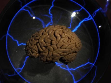 brain ind