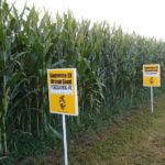 Organics versus GMO: Why the debate?