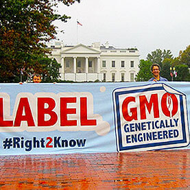why we science should accept gmo labelings