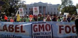 "Economist editorial: 'Green"" anti-GMO activists are like 'climate deniers'"