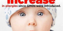genetically modified foods gmos linked to intestinal permeability allergies