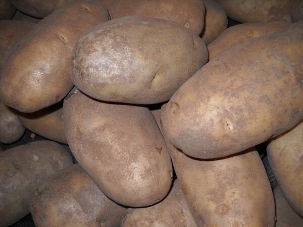 potato sized