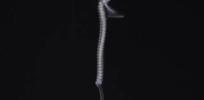 twistingmuscle