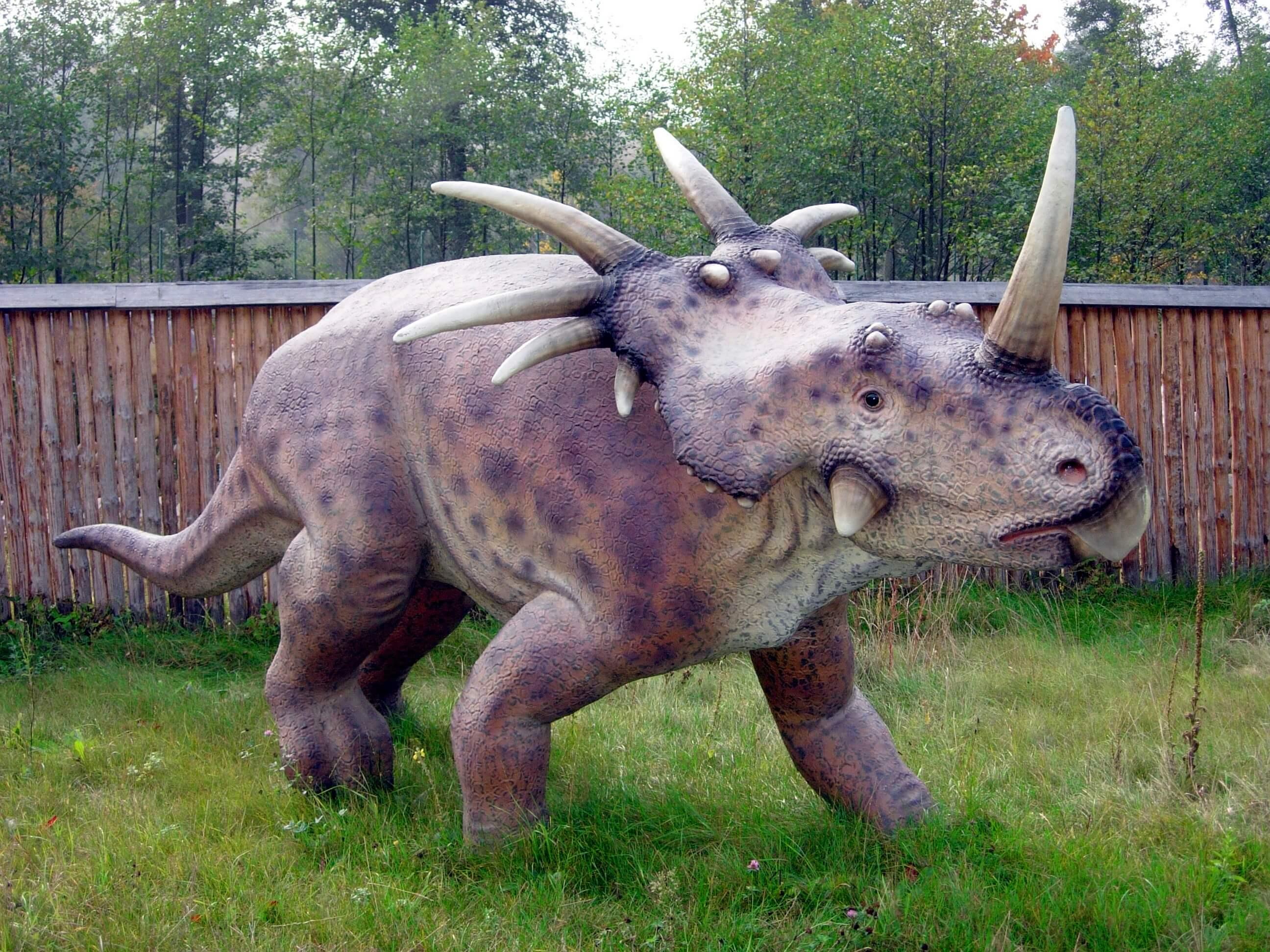 Styracosaurus Baltow