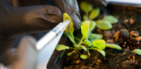 "Bionic plants developed at MIT focus on the ""tech"" half of biotech"
