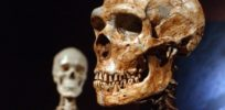Neanderthal epigenetics probably not a great target for autism research