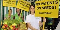 Do patents limit GMO research and farmers choice? Only a little