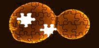 yeast puzzle imagejpeg
