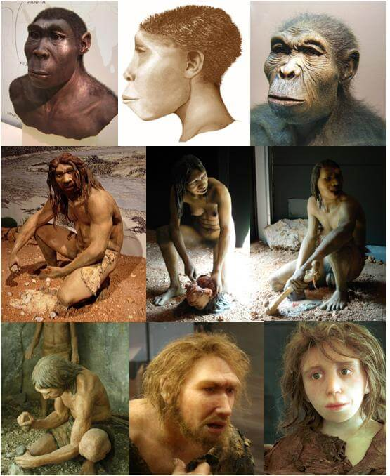 Homo Models