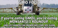 "GMO Myth: Farmers ""drown"" crops in ""dangerous"" glyphosate. Fact: They use eye droppers"