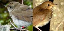 Changing climates, mixing genes: Global warming may cause an increase in animal hybrids