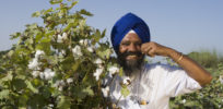 pic bt cotton punjab farmer