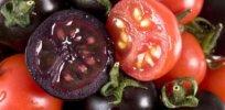 tomato purple b