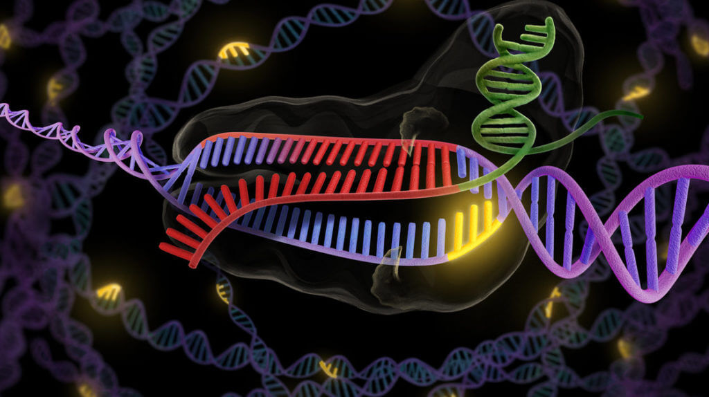 understanding how genetic engineering works from the perspective of the dna Why is genetic engineering important • purify protein • understanding of dna genetic information.