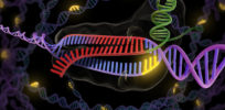 Safer CRISPR? Cas13 version edits RNA, not DNA