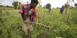 Katine farmer woman