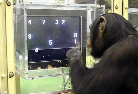 chimpAP x