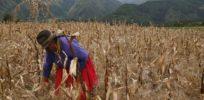 ecuador farm worker x