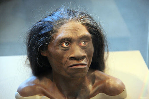 px Homo floresiensis adult female model of head Smithsonian Museum of Natural History