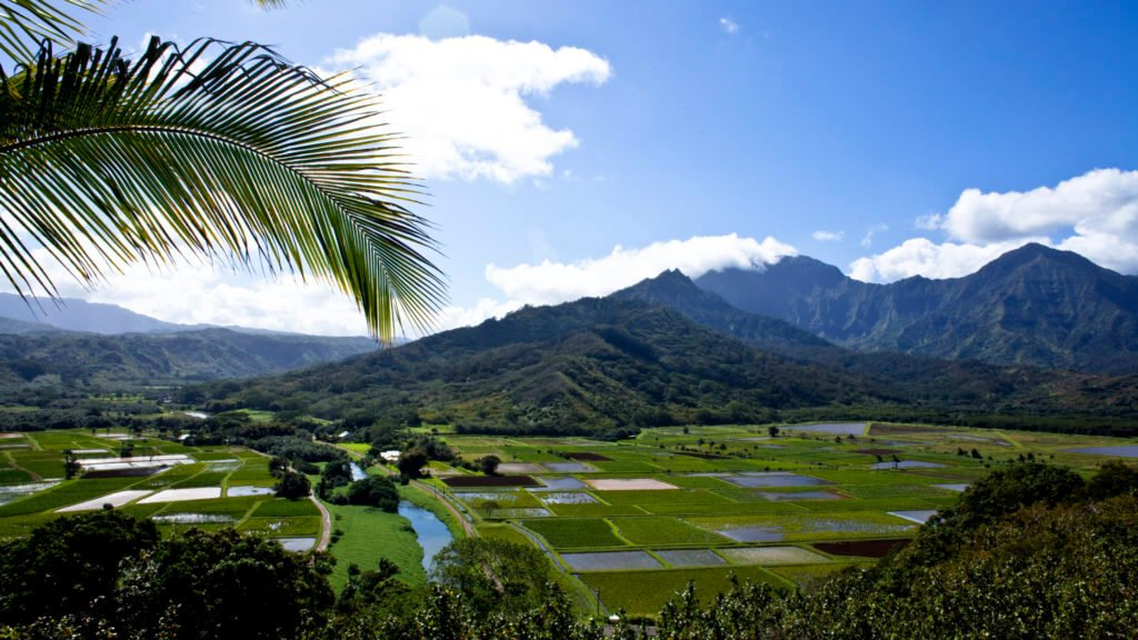 kauai fields