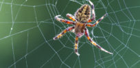 Can spider genes be genetically engineered to make eco-friendly cars?
