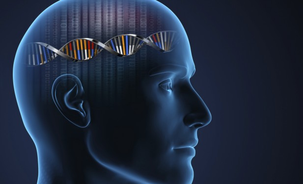 More evidence IQ is in the genes